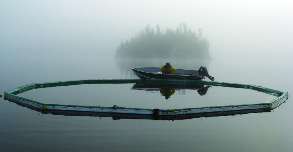 ELA boat on lake, foggy A\J AlternativesJournal.ca