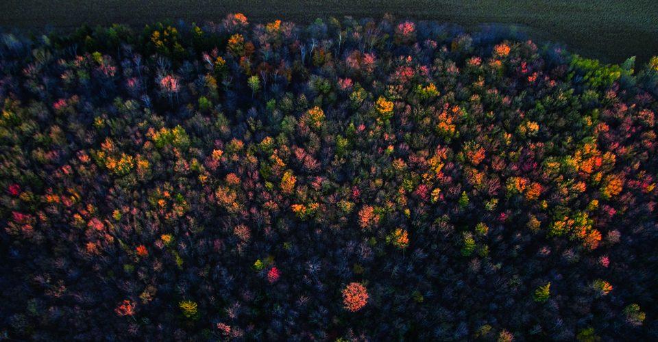 Aerial photo of autumn forest. A\J AlternativesJournal.ca