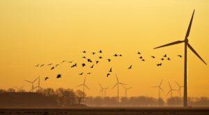 turbinebirds740