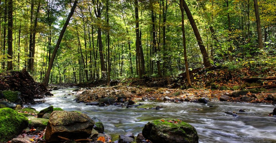 Ontario Forest © Christopher Meder - Fotolia