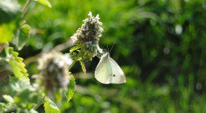 butterfly in waterloo flickr-acameronhuff
