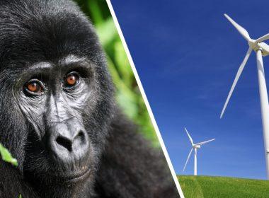 greenblts_gorilla