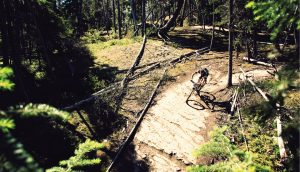 Man biking on a trail in the forest. A\J AlternativesJournal.ca