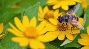 bee on flower © TOMO - Fotolia