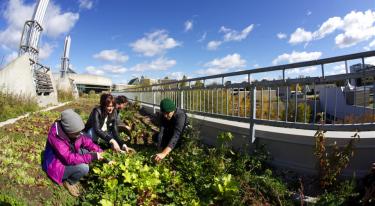 Trent University students on a rooftop vegetable garden