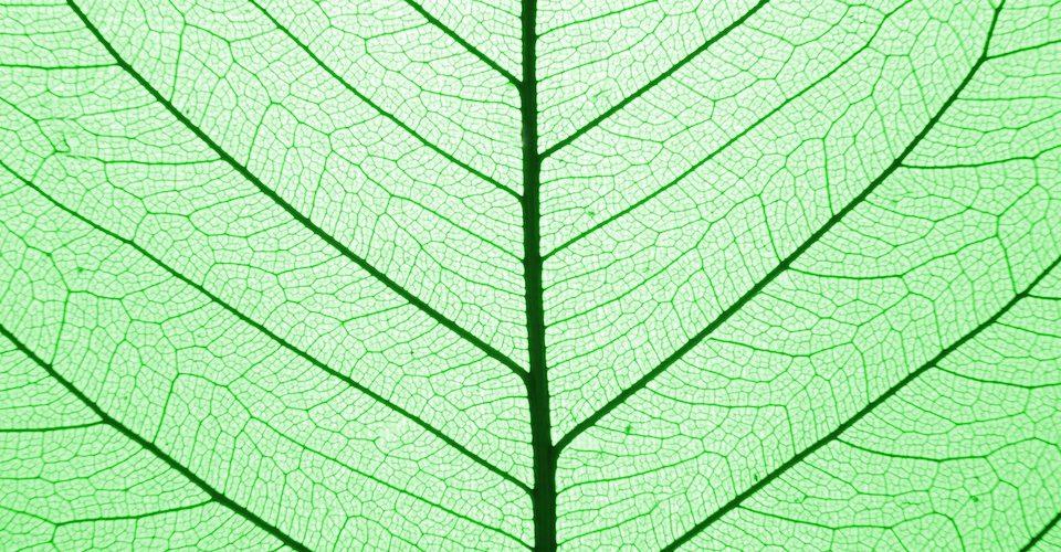 solar leaf A\J AlternativesJournal.ca