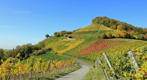 winery eco-friendly travel voluntour A\J AlternativesJournal.ca