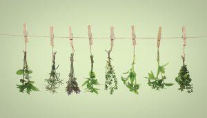 drying herbs A\J AlternativesJournal.ca