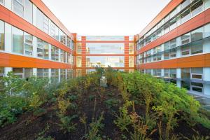 UBC green roof by Don Earhardt in A\J AlternativesJournal.ca