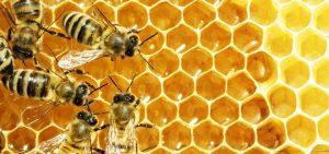 Bees on honeycomb. Alternatives Journal. A\J.
