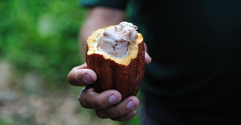 Cacao pod and seeds.