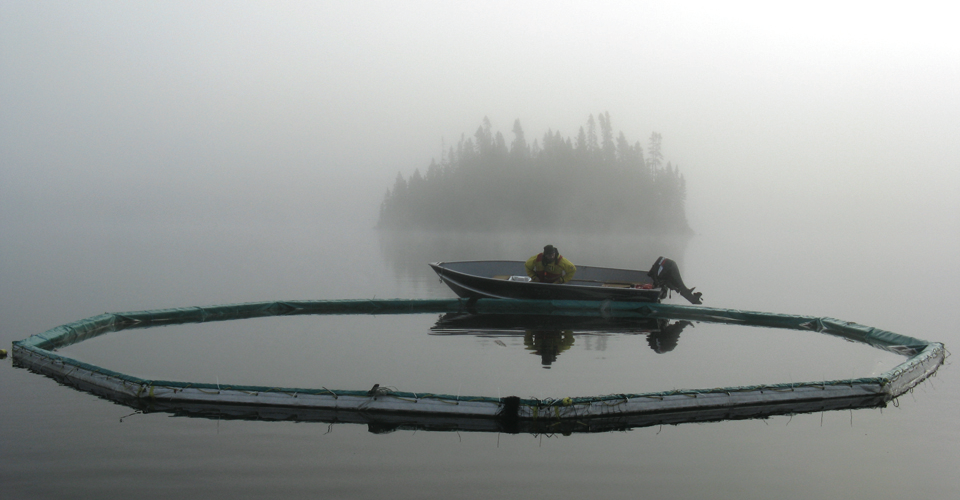 A researcher at the Experimental Lakes Area in Ontario.