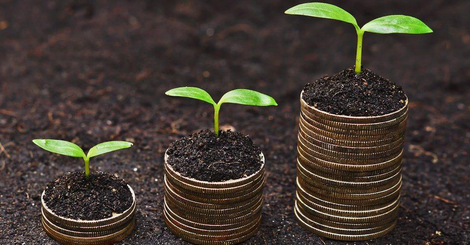Seedlings growing on stacks of coins.