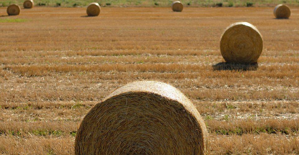 Straw bales on a field.