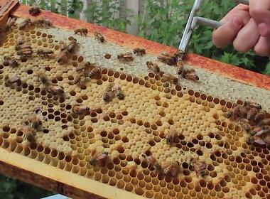 DIY beekeeping beehive frame
