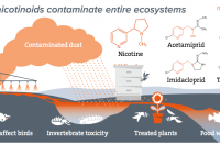 How neonicotinoids contaminate entire ecosystems