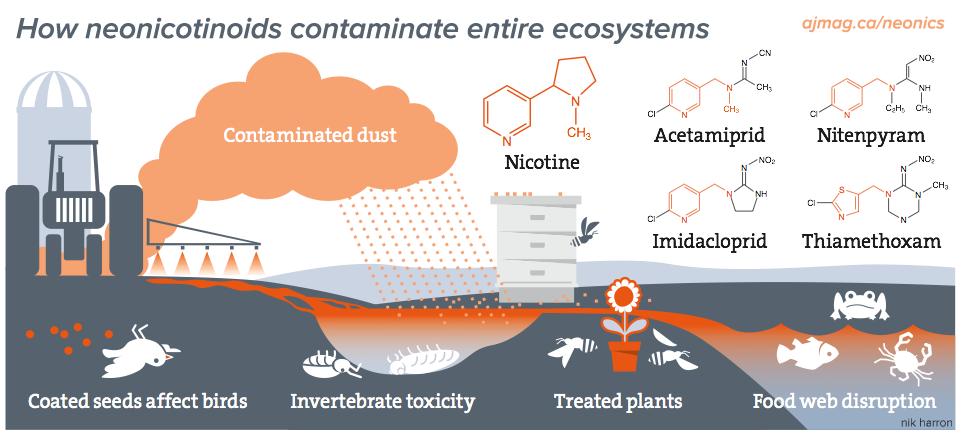 How neonicotinoids contaminate entire ecosystems