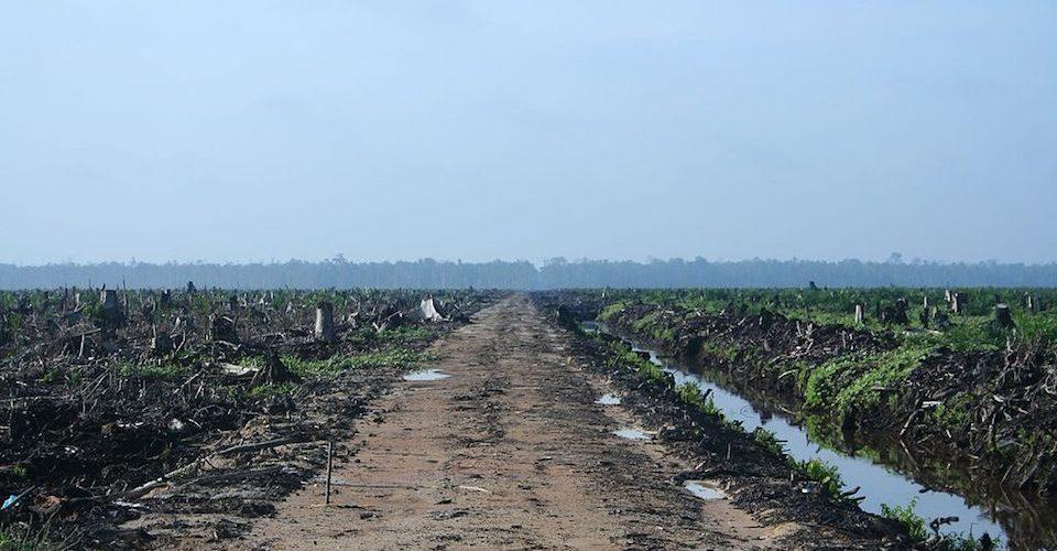 Oil Palm Concession in Riau, Sumatra