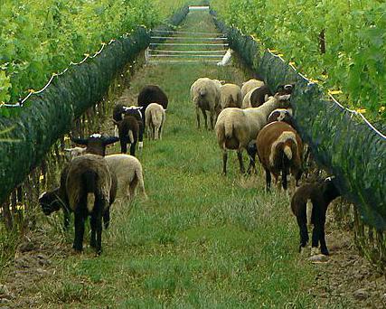 Southbrook Vineyards biodynamics