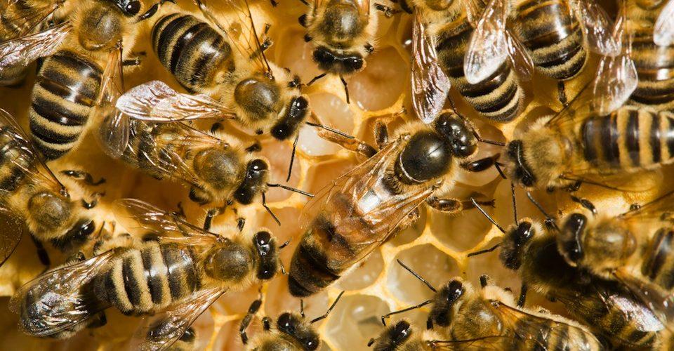 bees neonicotinoids A\J AlternativesJournal.ca