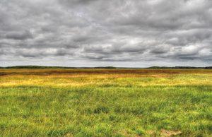 The Tantramar salt marshes of New Brunswick