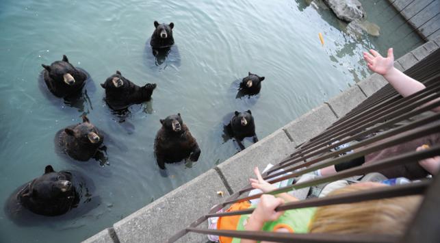 Marineland bears, JoAnne McArthur
