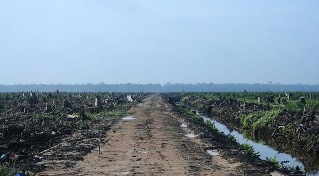 A palm plantation.