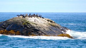 Shorebirds in southern Nova Scotia at Port Joli