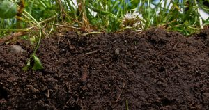 What Healthy Soil Looks Like | Natural Resources Conservation Soil Program