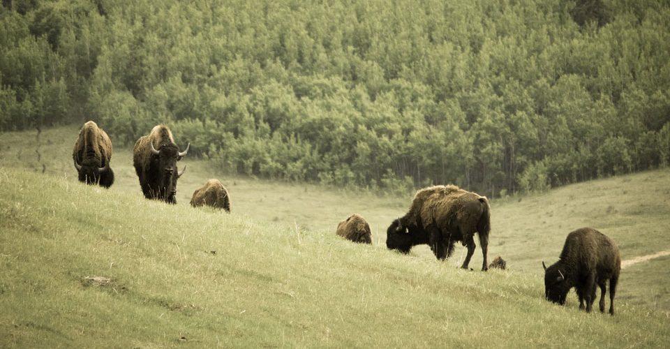 Canadian Rocky Mountain Ranch by Gonzalo Pineda Zuniga | Flickr
