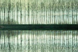Padule di Fuecchio wetlands, Italy | Francesca