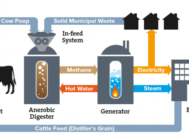 The virtuous loop: manure used to provide methane to a power generator