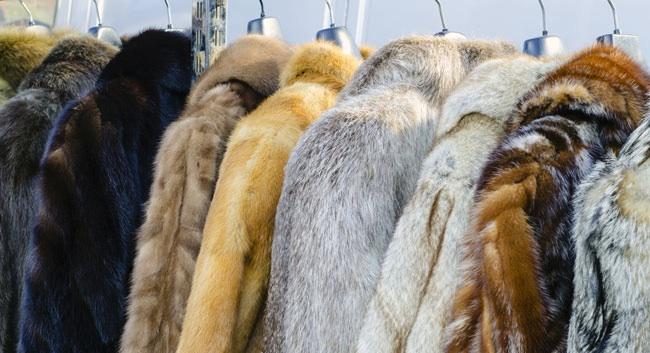 (Photo: a rack of fur coats)