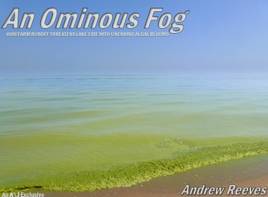 An Ominous Fog title image