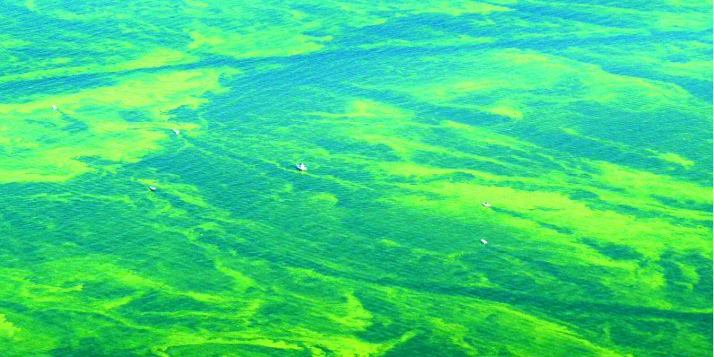 Algal bloom on Lake Erie