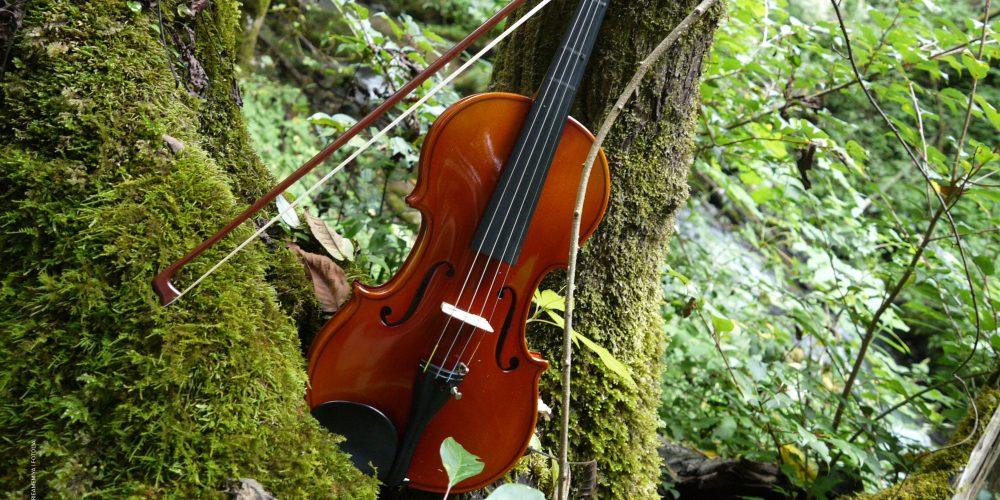 Fiddle4Blog_banner28685544