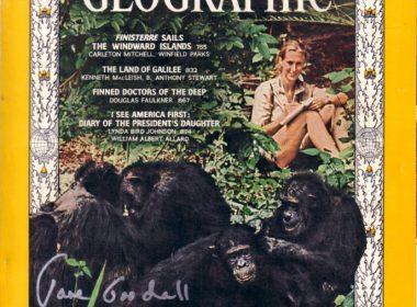 Jane Goodall on the NatGeo 1965 cover