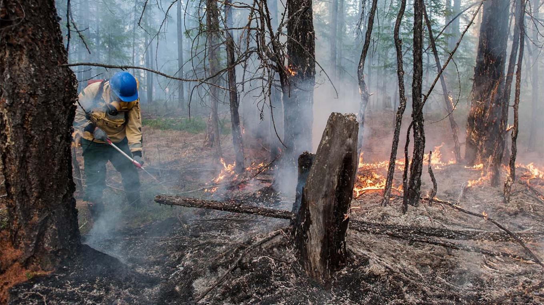 Siberian Forest Fire