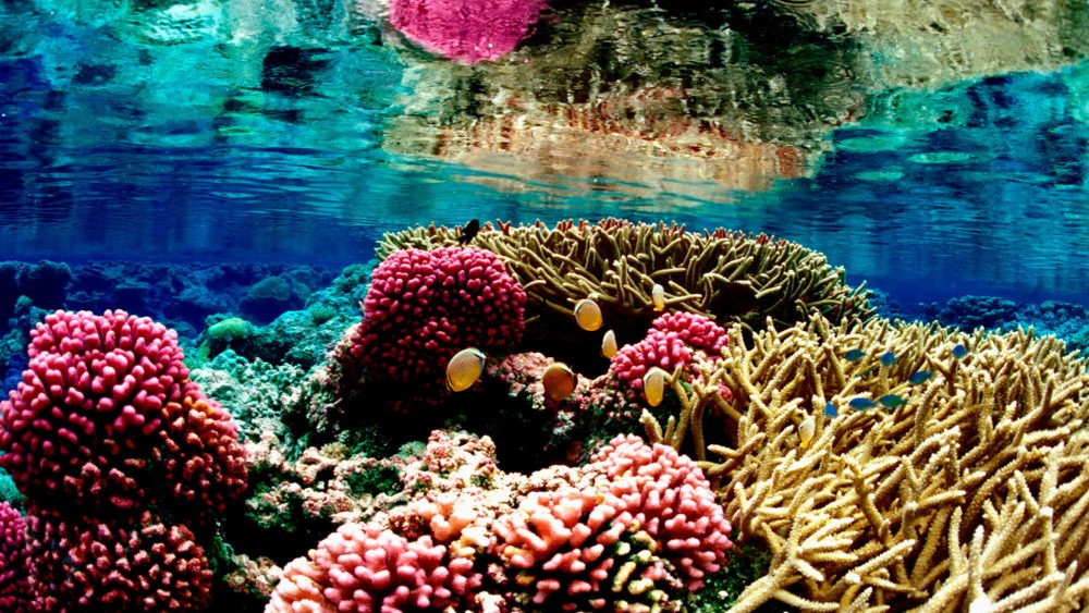 Eastern Tropical Pacific Coral Reefs Adapting to Heat Stress by Shanella Ramkissoon