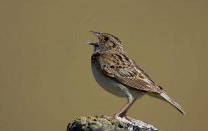 https://www.birdwatchersdigest.com/bwdsite/solve/howto/bird-listening.php