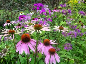 https://www.torontogardens.com/2015/02/evergreen-canada-native-plant-database.html/